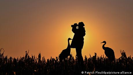 Germany, sun rise, a person looking through binoculars in a field surrounded by crane birds