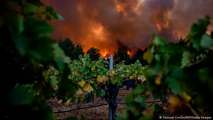 USA | Kalifornien Waldbrände | Napa Valley | Weinberge (Samuel Corum/AFP/Getty Images)