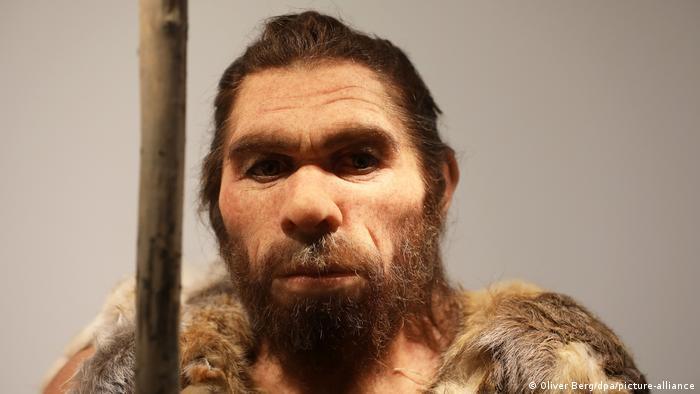 BdT I Neue Präsentation des Neandertalers im LVR-Landesmuseum (Oliver Berg/dpa/picture-alliance)