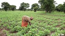 Eco Africa #236