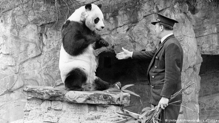 Чи-Чи в зоопарке Лондона. 1966 год