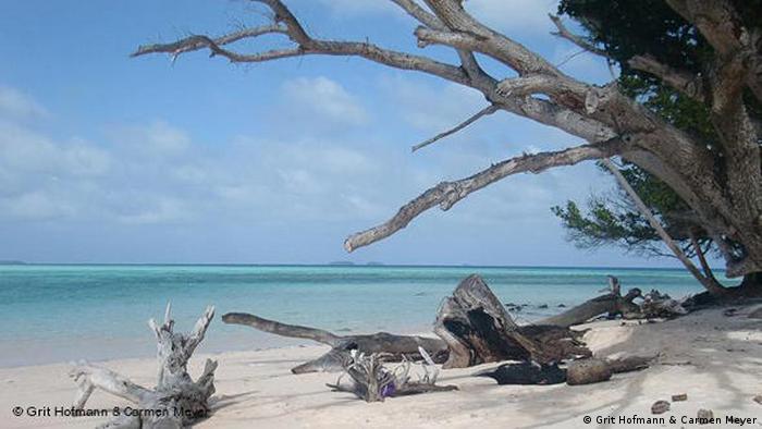 Küstenerosion in Mikronesien. (Foto: Grit Hofmann & Carmen Meyer)