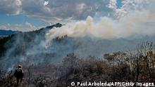 Kolumbien Zerstörung Koka-Plantage