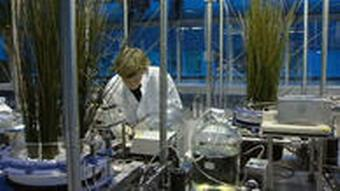 A scientist in a lab with plants
