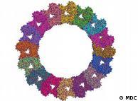 Modelo molecular de Oliver Daumke de la proteína