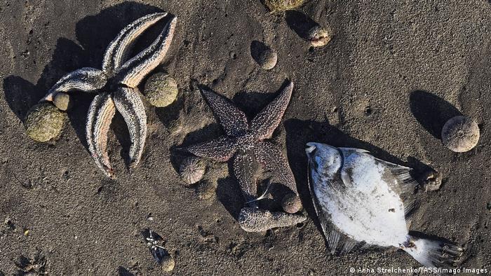 Мертвые морские животные на берегу бухты Безымянная на Камчатке