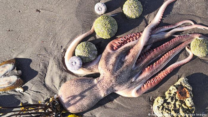 Russland | Umweltverschmutzung Strand von Kamtschatka