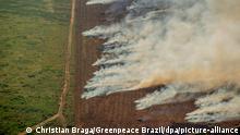 Brasilien I Brände im brasilianischen Amazonas-Gebiet nehmen zu
