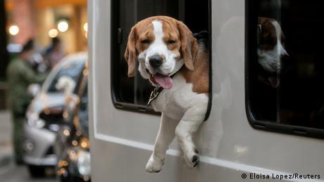 A dog aboard a vehicle