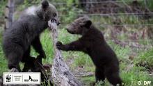 Eco Africa I EAAE_DYB_Bear