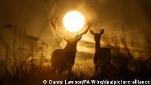 07.10.2020, Großbritannien, Ripon: Zwei Hirsche stehen beimherbstlichen Sonnenaufgang im Studley Royal Deer Park in Nord-Yorkshire. Foto: Danny Lawson/PA Wire/dpa +++ dpa-Bildfunk +++ |