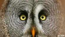 DW Dokumentationen | Der Wert der Artenvielfalt Äthiopien