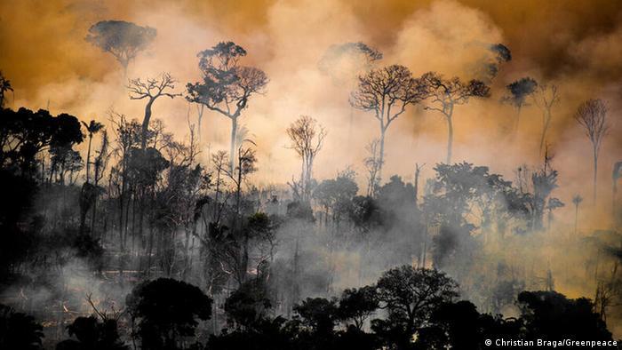 Waldbrand im Amazonas