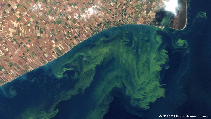 Cyanobakterien-Blüte im Eriesee.
