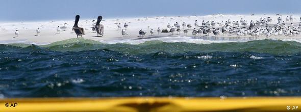 Meereswasser, teilweise von Ölfilm belegt, Vögel am Strand (Foto: AP)