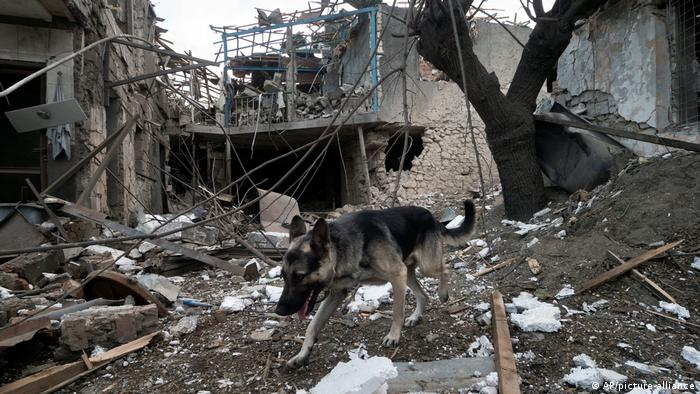 a dog in the rubble of a shelled house