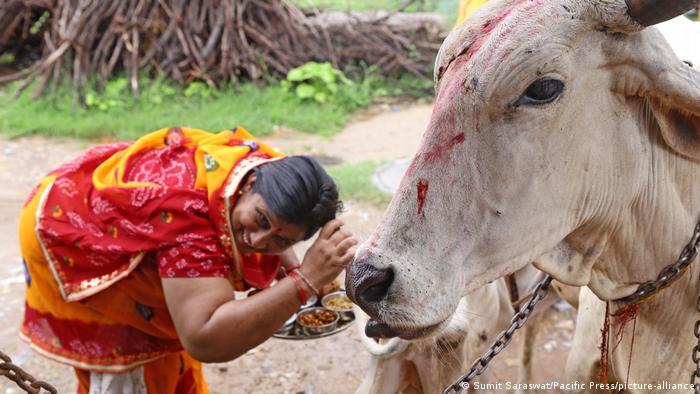 گاو در آیین هندو مقدس است، اما ایزد پنداشته نمیشود. گاو در اسطورهشناسی هندو با شماری از خدایان از جمله کریشنا خویشاوندی دارد. به باور هندوها کریشنا یکی از مظاهر خداوند روی زمین و نماد حاصلخیزی است. هندوها گوشت گاو نمیخورند، اما از فرآوردههای لبنی چون شیر و کره استفاده میکنند.