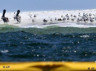 Ölteppich vor der Küste Lousianas (Foto: AP)
