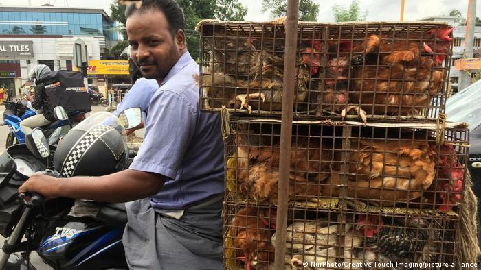 اینکه هند پر است از انسانهای گیاهخوار، افسانه و خیالی بیش نیست. طبق نظرسنجیها بیش از یک سوم مردم هند از خوردن گوشت پرهیز میکنند و به باور برخی کارشناسان مرئم به خاطر فشارهای فرهنگی و سیاسی است که گوشتخواری را کتمان میکنند. شمار واقعی افراد گیاهخوار در هند به مراتب کمتر از برداشت رایج است.
