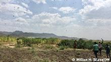 Äthiopien | Heuschreckenplage an der Grenze zu Tigray und Amhara