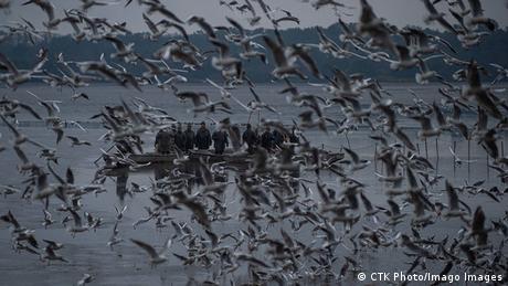 Jutro je i ljudi kreću da hvataju ribu na jezeru Rožmberk na jugu Češke. To jezero je u stvari ribnjak, izgrađen krajem 16. veka podizanjem brane. Ribnjak je od 1995. pod zaštitom kao prirodni rezervat, a hvatanje ribe dozvoljeno je tek na svake dve godine.