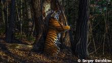Гран-при Wildlife Photographer of the Year