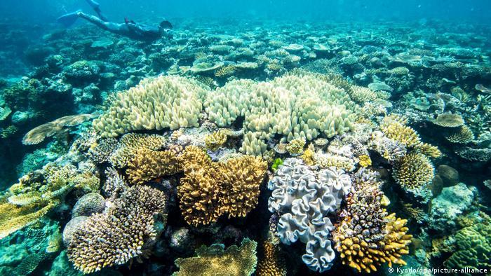Australien | Korallenriff | Great Barrier Reef