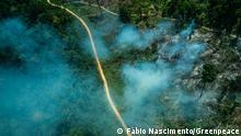 Brasilien | Bundesland Pará | Luftaufnahme im Amazonas