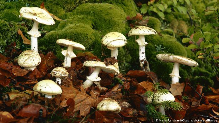 Pilze auf Waldboden