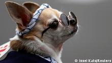 صورة لكلب بنظارات شمسية