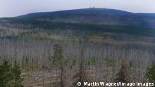 Deutschland Baumsterben im Nationalpark Harz nahe des Brocken (Martin Wagner/Imago Images)