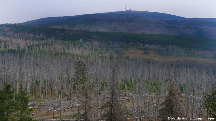 Deutschland Baumsterben im Nationalpark Harz nahe des Brocken