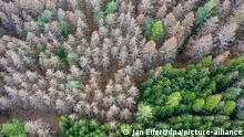 Deutschland Waldsterben im Taunus