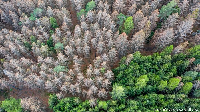 Aerial picture of partially dead spruce forest in west Germany