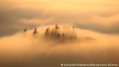 Četinari proviruju iz magle u bavarskim Alpima. Mesto Bernbojren u blizini još uvek se ne vidi.