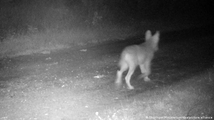 Еще одна июньская фотография, сделанная фотоловушкой для диких животных