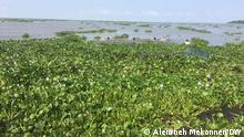 A campaign to remove water hyacinth from lake Tana, Ethiopia, Amhara region, Bahir Dar 19.10.2020 Copyright: Alemneh Mekonnen (DW Bahir Dar)