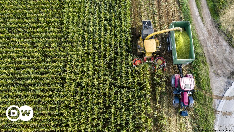 Opinion: Small-scale farmers must control our food system
