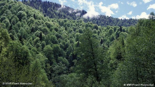 The Borjomi-Kharagauli national park in Georgia