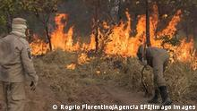 Brasilien Waldbrände Pantanal