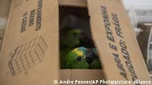 Brasilien Jundiai | Gerettete Papageien