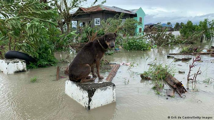 A dog sits on a partially submerged concrete post in the Philippines