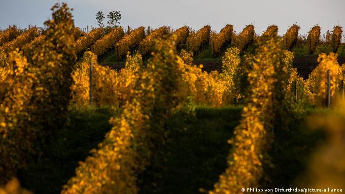 Осенние ландшафты в Баден-Вюртемберге