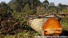 Brasilien Paraná | Wälder | Abholzung (Zig Koch/Natureza Brasileira)