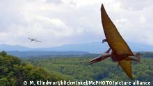 Dinosaurier Pteranodon (M. Klindwort/blickwinkel/McPHOTO/picture alliance )