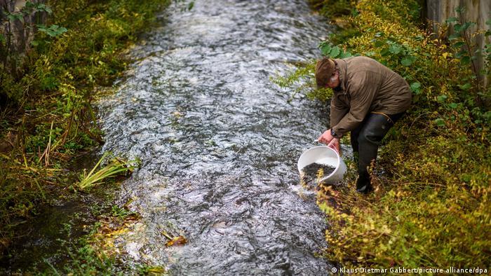 Общая протяженность реки Нуте (Nuthe) в Саксонии-Анхальт составляет всего около 40 километров. Первых молодых лососей здесь выпустили в 2009 году