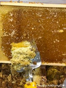 Fresh honey comb