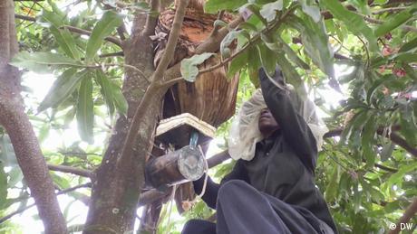 DW Sendung EcoShow#241   06.11.2020   Rwanda beekeeper