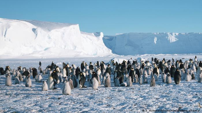 Colony of penguins with hills of ice in the background