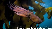 Dokumentarfilm My Octopus Teacher